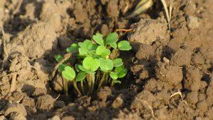 Cómo aprovechar los recursos naturales en una bioconstrucción