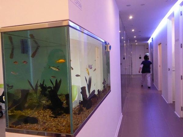 Clínica Alsana corredor acuario