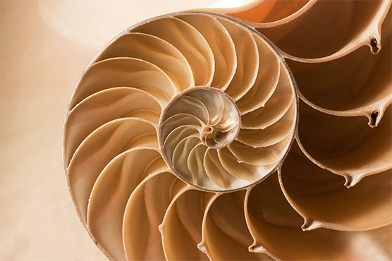 Bioconstruir | Close Up Nautilus Shell Pattern